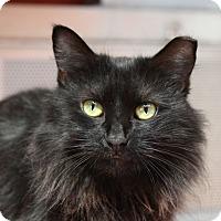 Adopt A Pet :: Bethany - Sarasota, FL