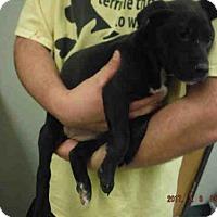Adopt A Pet :: A572889 - Oroville, CA