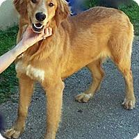 Adopt A Pet :: Pippi - BIRMINGHAM, AL