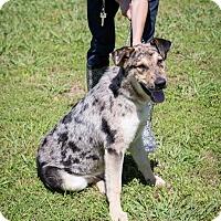 Adopt A Pet :: Nelson - Austin, AR