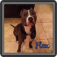 Adopt A Pet :: Flex - Spring, TX