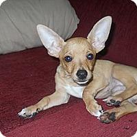 Adopt A Pet :: JD - Charlotte, NC
