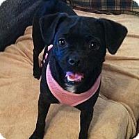 Adopt A Pet :: Sweetie - Phoenix, AZ