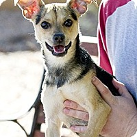 Adopt A Pet :: Sneaker - Only $25 adoption! - Litchfield Park, AZ