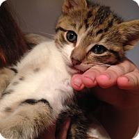 Adopt A Pet :: Lee - Riverhead, NY