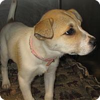 Adopt A Pet :: ELOISE - ADOPTION PENDING - Sudbury, MA