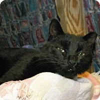 Adopt A Pet :: Wisdom - Dover, OH