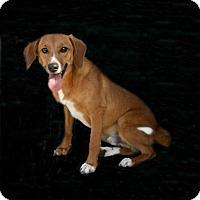 Adopt A Pet :: Red - Lufkin, TX