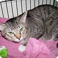 Adopt A Pet :: Pogo - Scottsdale, AZ