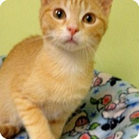 Adopt A Pet :: Tom Cat - Tunica, MS