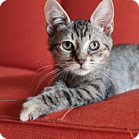 Adopt A Pet :: Jem - Brooklyn, NY
