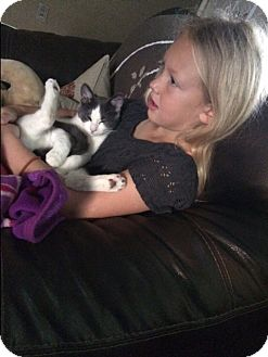 Domestic Shorthair Kitten for adoption in Lombard, Illinois - Figaro - PENDING ADOPTION!