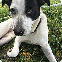 Adopt A Pet :: Adele - Miami, FL