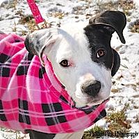 Adopt A Pet :: Henley - Reisterstown, MD