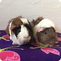 Adopt A Pet :: Agnes & Florence - Grand Rapids, MI