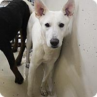 Adopt A Pet :: A23 Walsh - Odessa, TX