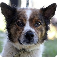 Adopt A Pet :: Bear - Picayune, MS