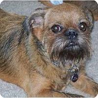 Adopt A Pet :: NESTLE in Tempe, AZ. - Mesa, AZ