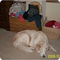 Adopt A Pet :: Alfie - Minneapolis, MN
