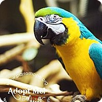 Adopt A Pet :: KIWI - Mantua, OH