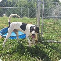 Adopt A Pet :: Yukon- SUPER URGENT - Providence, RI