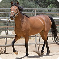 Adopt A Pet :: Minde - El Dorado Hills, CA