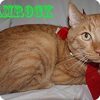 Adopt A Pet :: Shamrock - Converse, TX