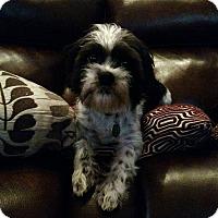 Adopt A Pet :: Spit - Salem, OR