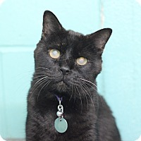 Adopt A Pet :: Hunter - Bradenton, FL