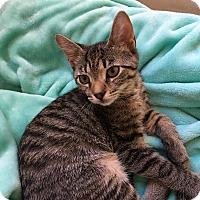 Adopt A Pet :: Heru - Colmar, PA