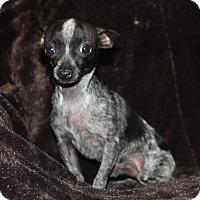 Adopt A Pet :: Popeye - Henderson, NV