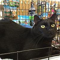 Adopt A Pet :: Rodgee - Gilbert, AZ