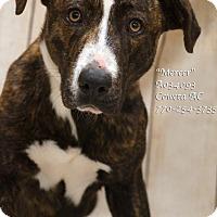 Adopt A Pet :: Mercer - Newnan City, GA