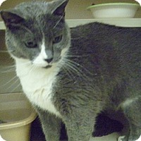 Adopt A Pet :: Eiko - Hamburg, NY
