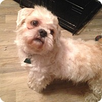 Adopt A Pet :: Louie - Staten Island, NY