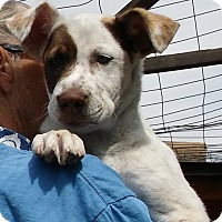 Adopt A Pet :: Delano - Palmdale, CA