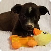 Adopt A Pet :: Emma - Elkton, MD
