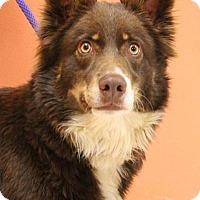 Adopt A Pet :: Carly - Cokato, MN
