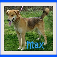 Adopt A Pet :: Max - New Albany, OH