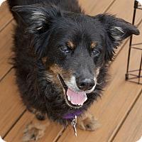 Adopt A Pet :: Huey - Hopkinton, MA