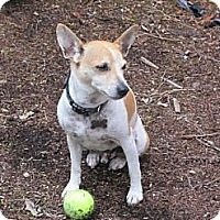 Adopt A Pet :: Paxton - Puyallup, WA