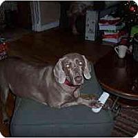 Adopt A Pet :: Emma - Eustis, FL