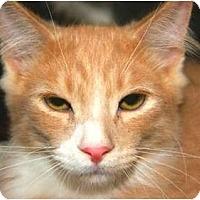 Adopt A Pet :: Jake - San Ramon, CA