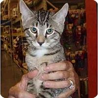 Adopt A Pet :: Simon - New Egypt, NJ