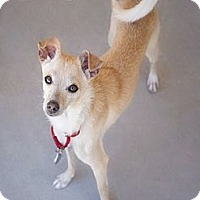 Adopt A Pet :: Tawney - Phoenix, AZ