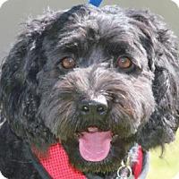 Adopt A Pet :: Clementine - La Costa, CA
