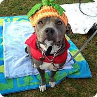 Adopt A Pet :: Betty - Los Angeles, CA
