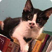 Adopt A Pet :: Meredith - Barrington, NJ