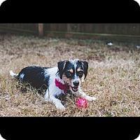 Adopt A Pet :: Casey - Woodstock, GA
