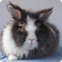 Adopt A Pet :: Rascal - Hahira, GA